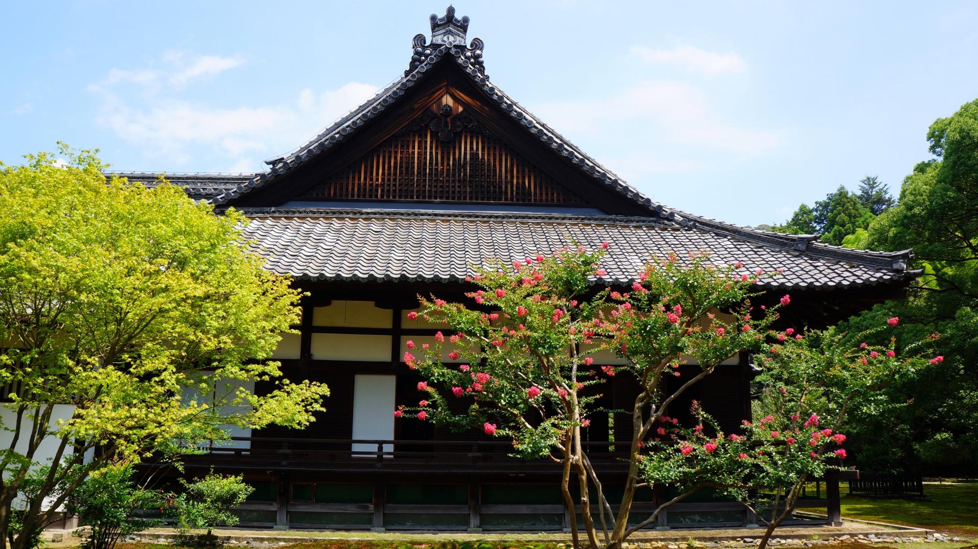 青蓮院の素晴らしい百日紅(サルスベリ)や青もみじと夏の情景