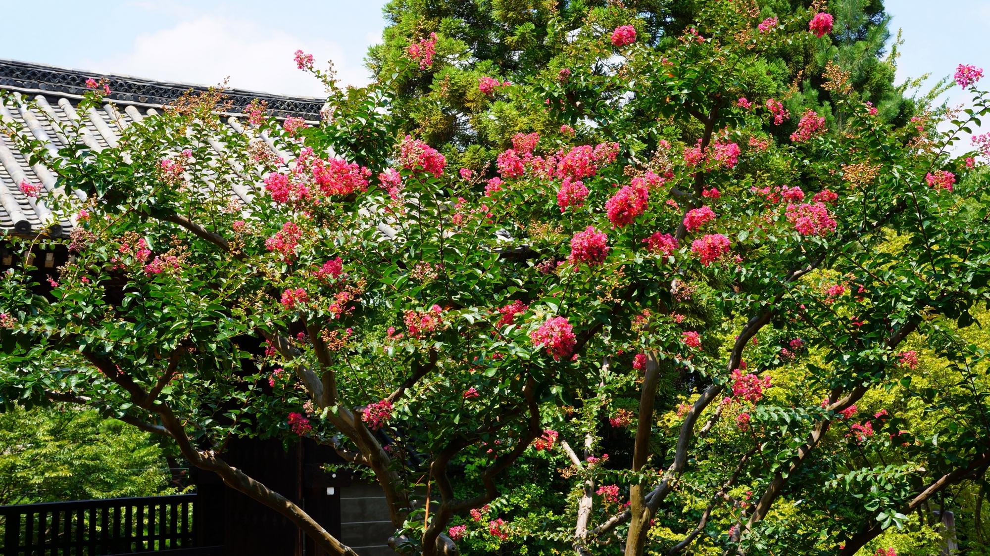 緑の上で踊る鮮やかな百日紅のピンクの花