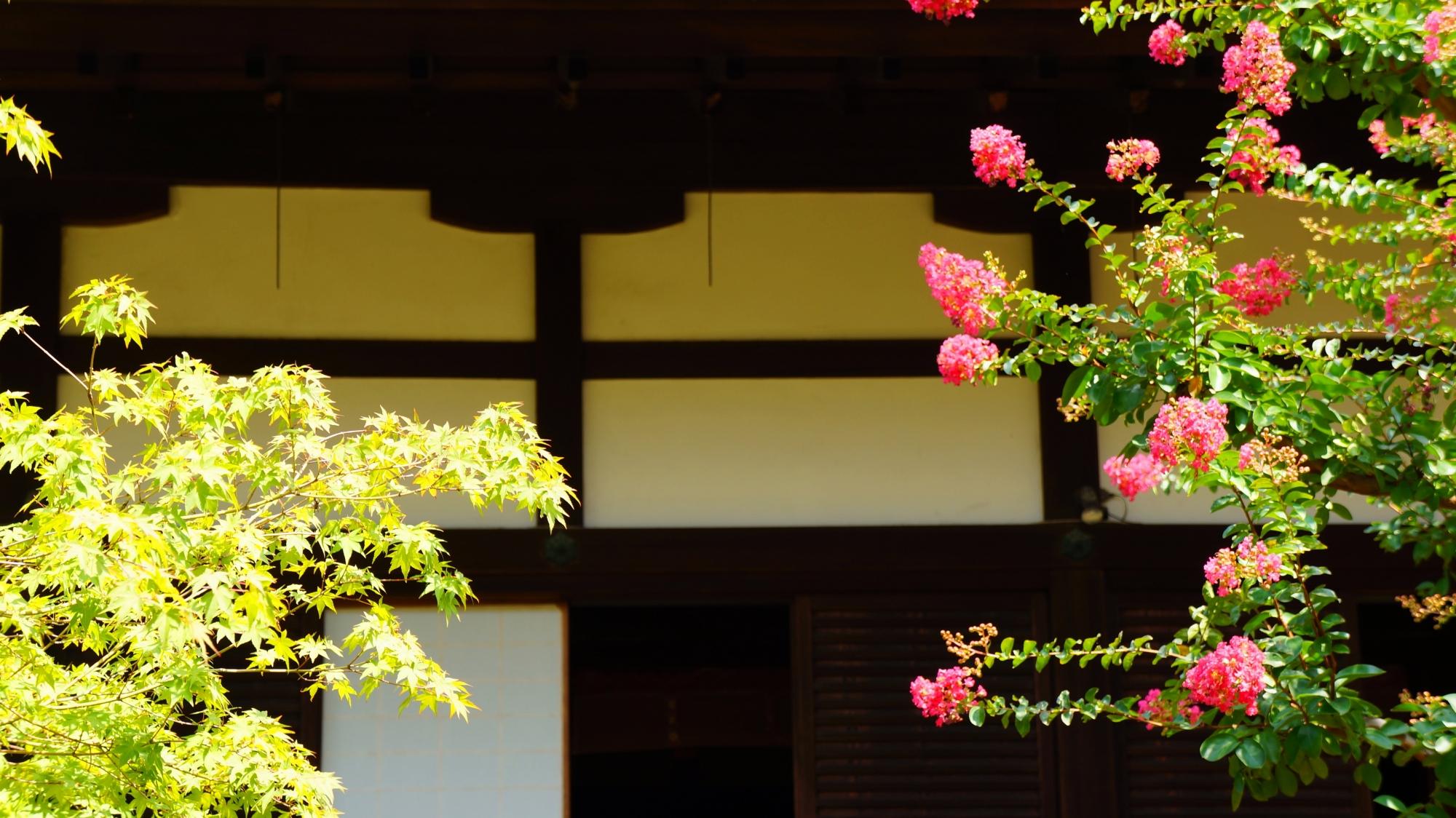 青蓮院の暑い夏を彩る百日紅のピンクと青もみじの緑