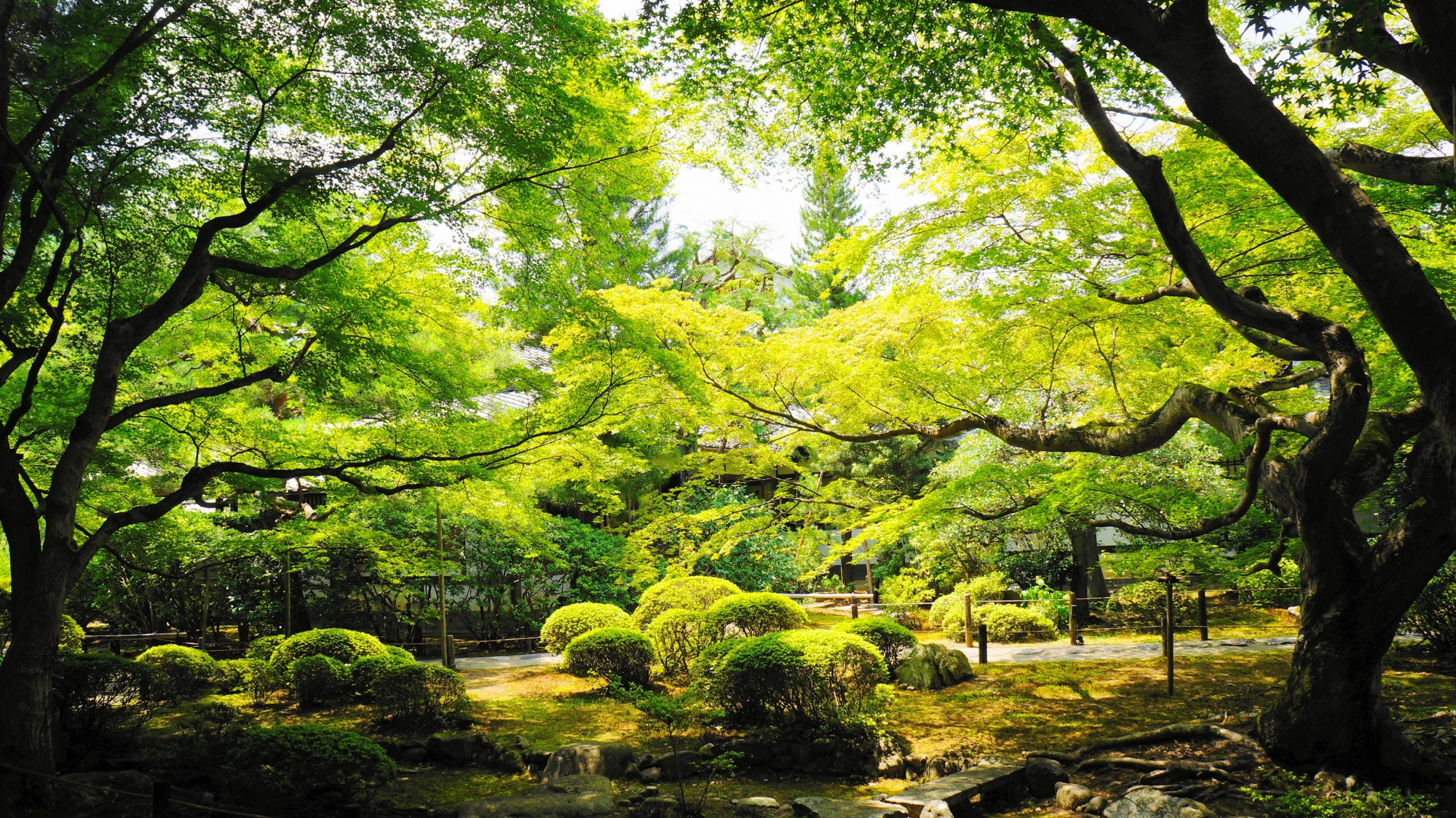 緑の空間が広がる夏の青蓮院の霧島の庭