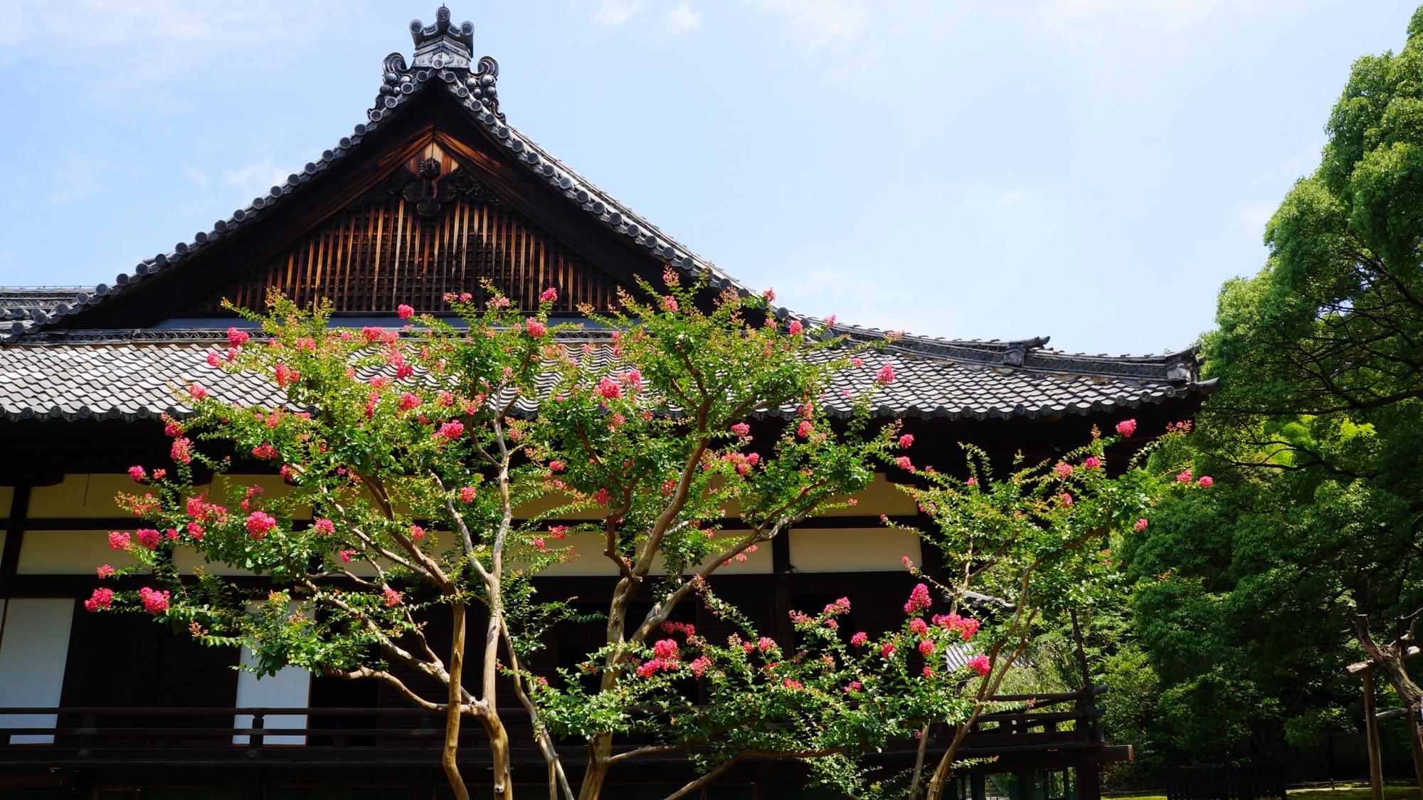 宸殿を華やぐ鮮やかなサルスベリの花