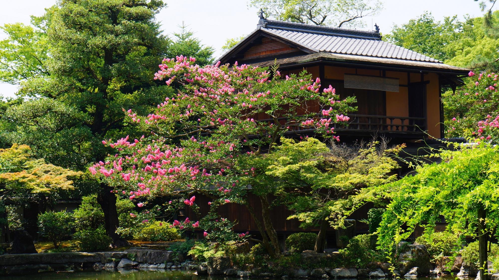拾翠亭を彩るピンクのサルスベリの花