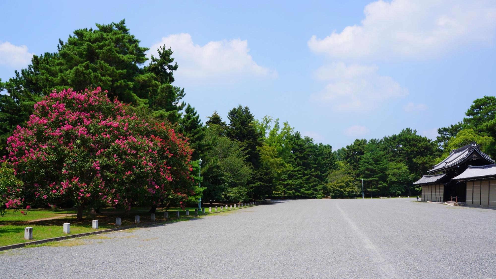 京都御所西側の溢れ出しそうなサルスベリ