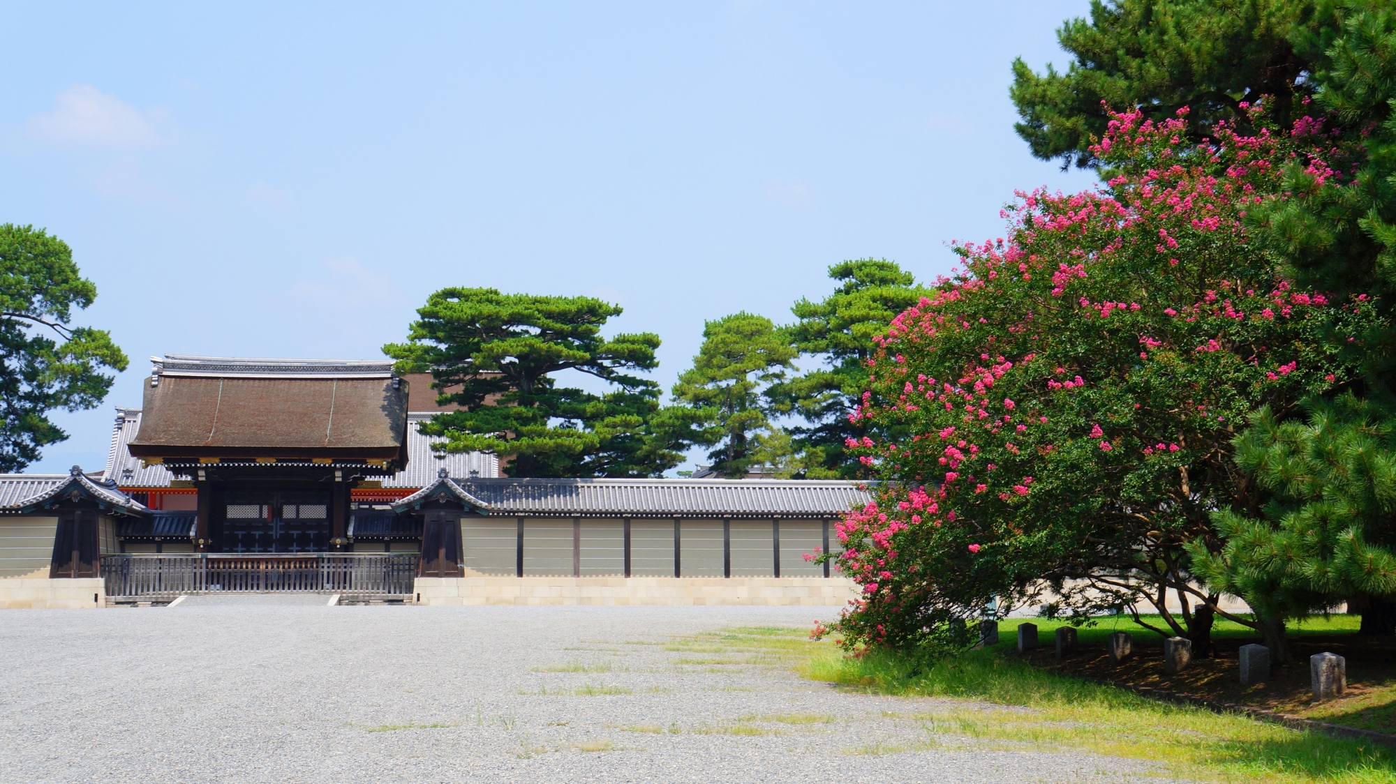 京都御所の建礼門前の鮮やかな百日紅(サルスベリ)