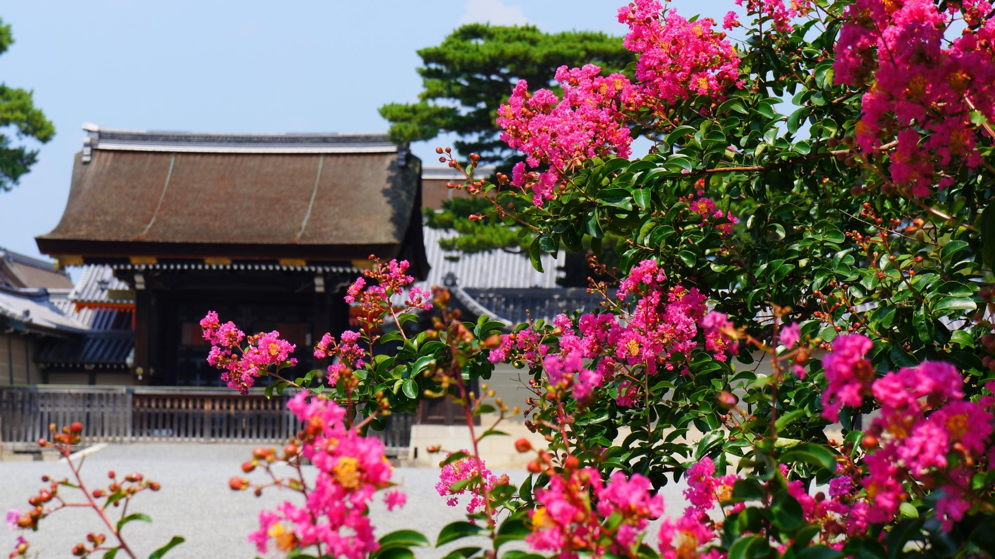 風に揺らめく輝くさるすべりのピンクの花