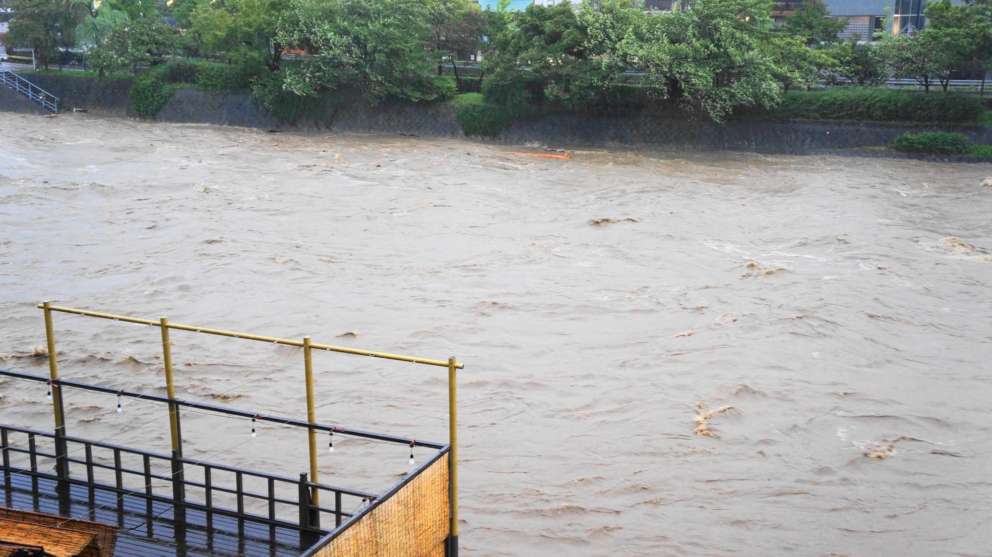 丸太や木などが流されてくる台風18号の大雨で増水した2013年の鴨川