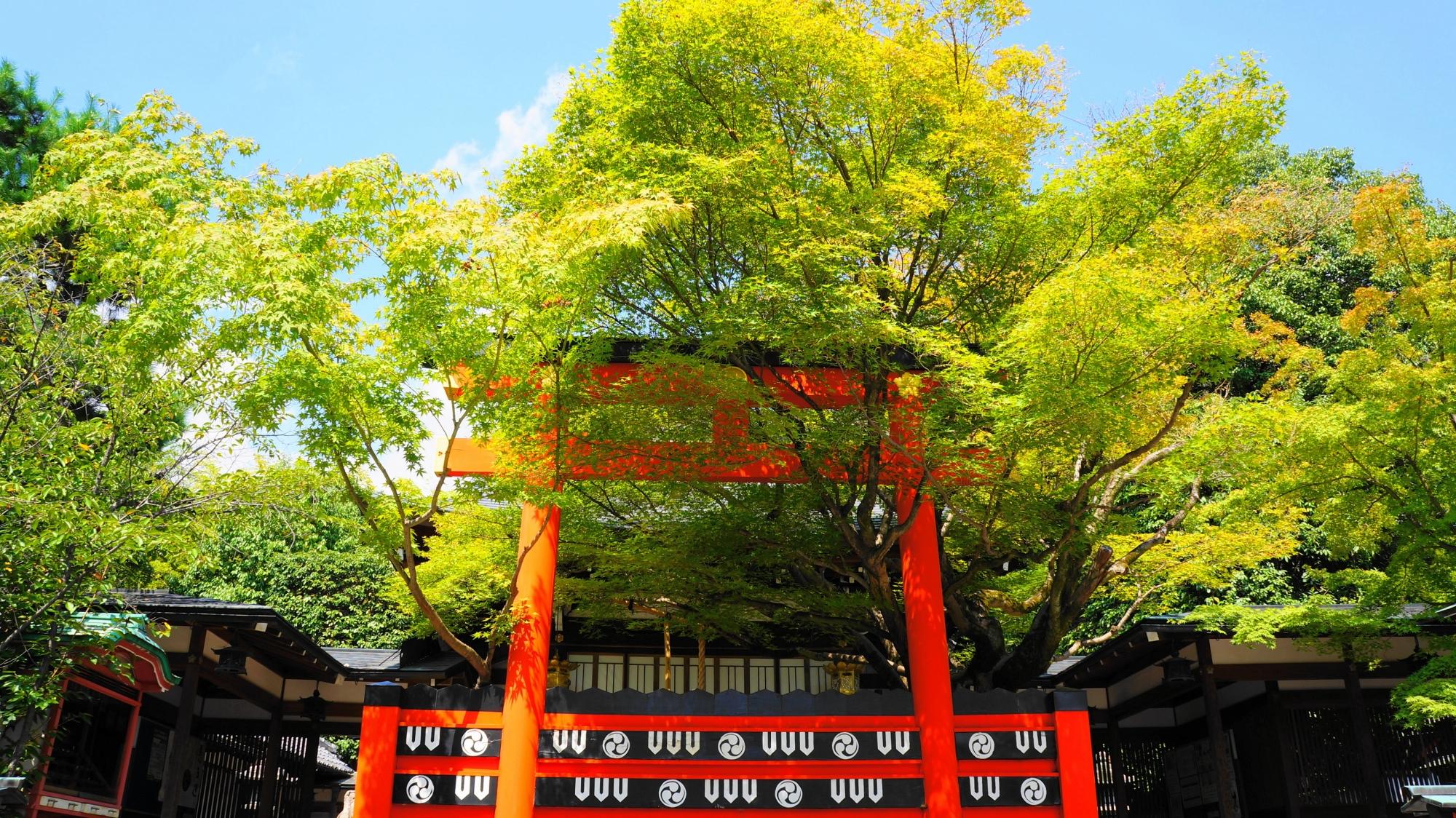 車折神社 青もみじ 芸能神社の赤い玉垣と京都のさわやかな緑