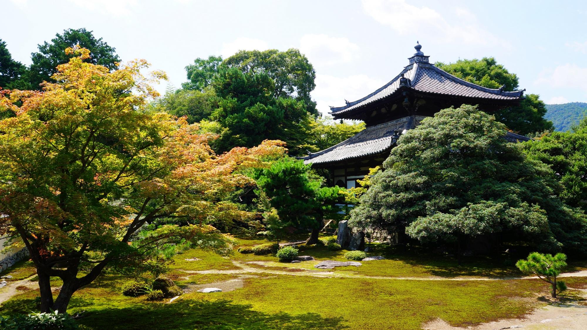鹿王院 青もみじと苔 嵐山の穴場のお寺