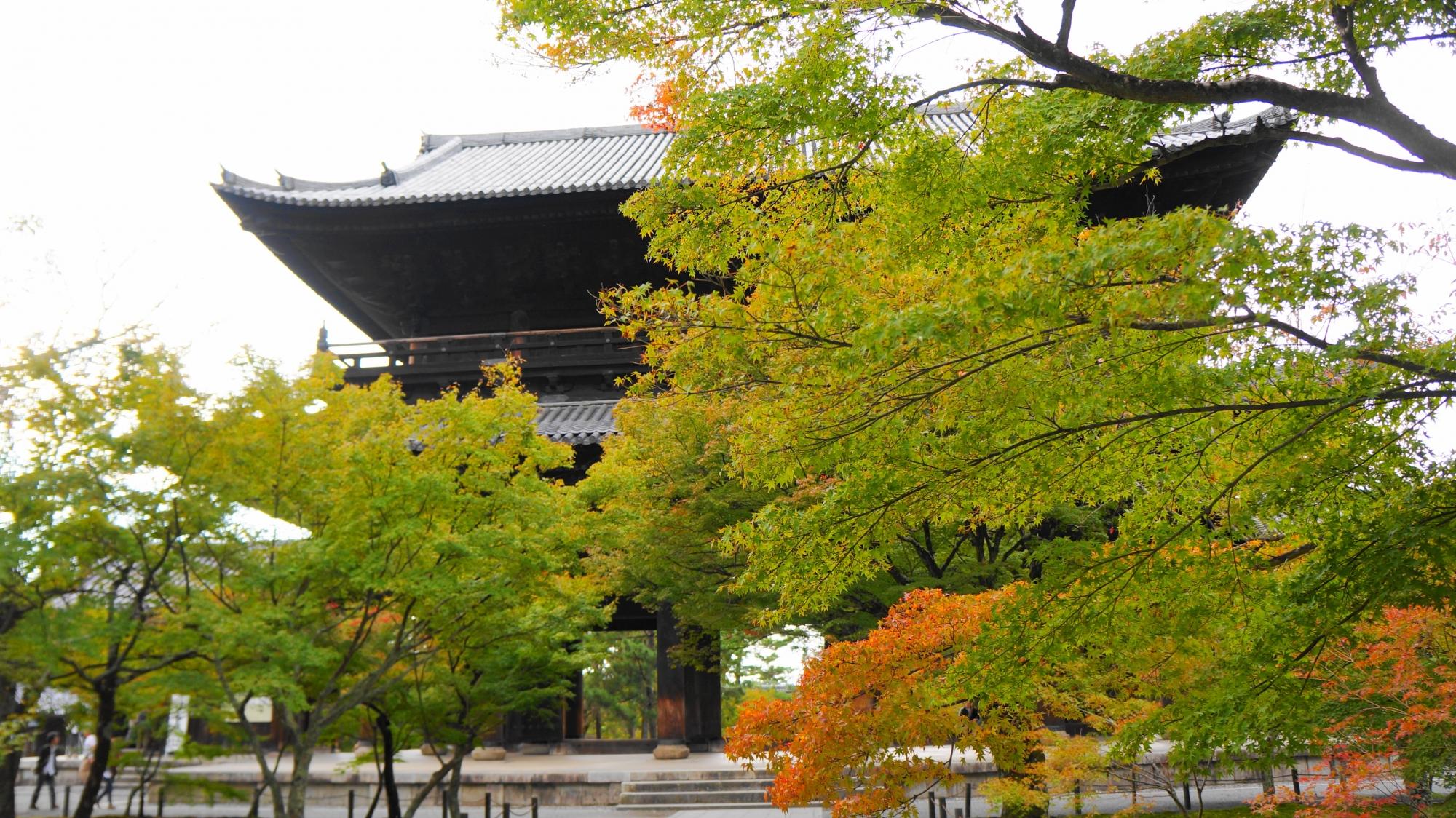 南禅寺の三門と青もみじ