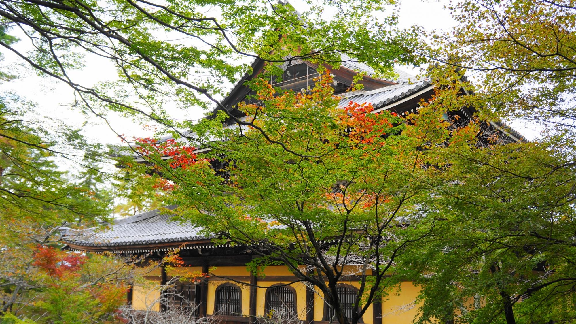 南禅寺の法堂と美しい青もみじ
