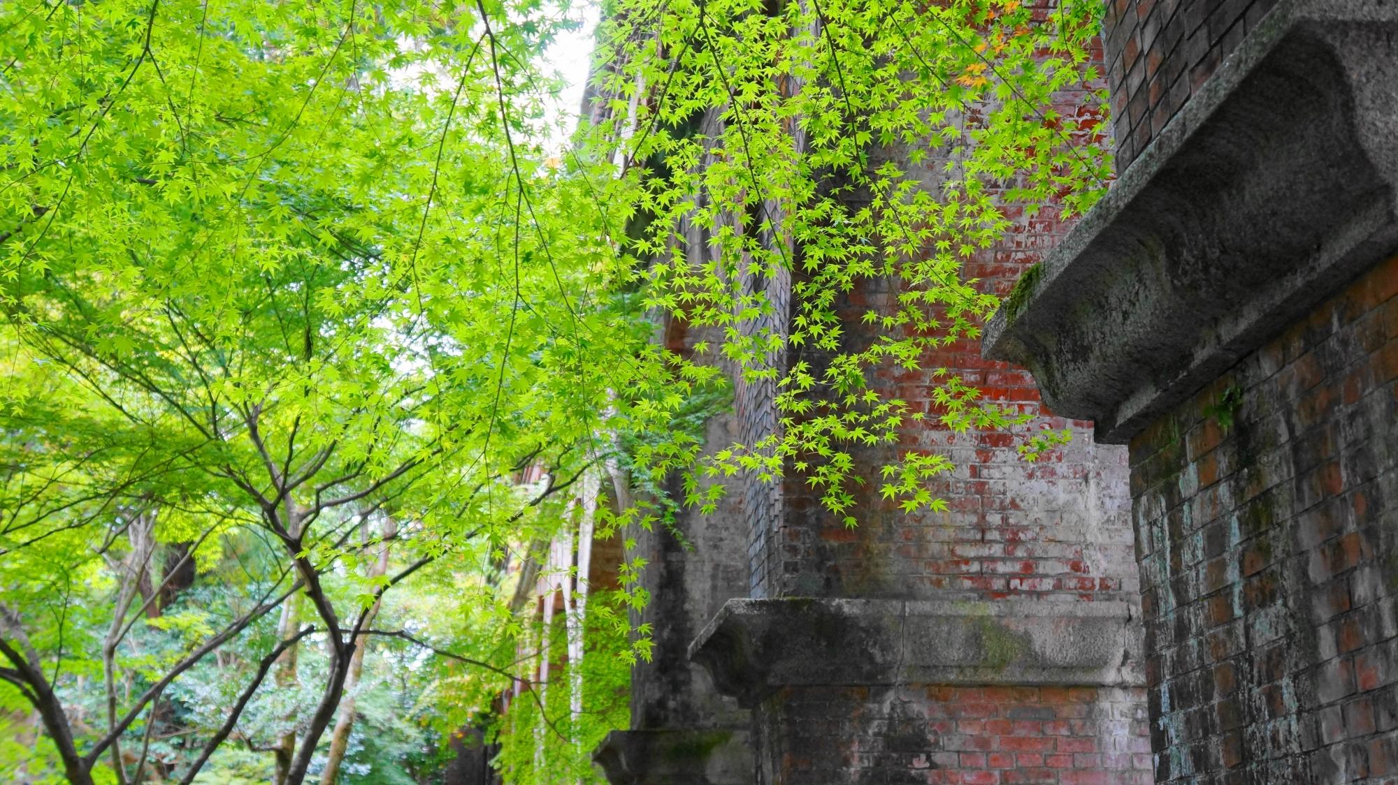 南禅寺の水路閣の鮮やかな青もみじ