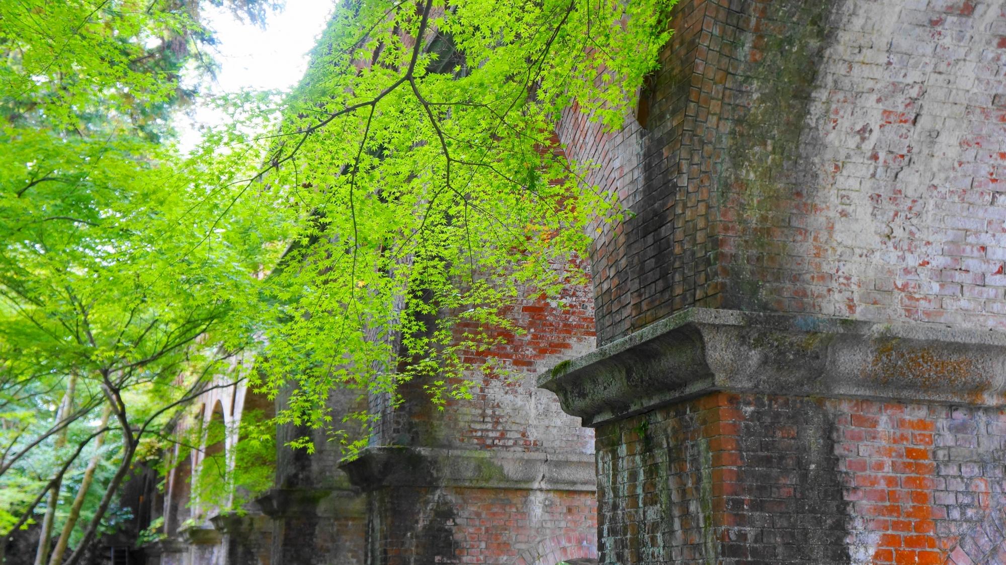 南禅寺のレトロな水路閣の美しい青もみじ