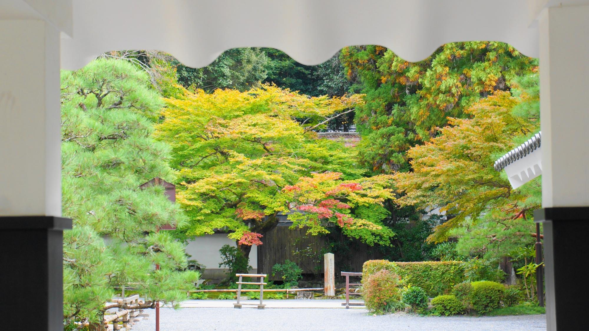 南禅寺の法堂から方丈へ続く回廊と綺麗な青もみじ