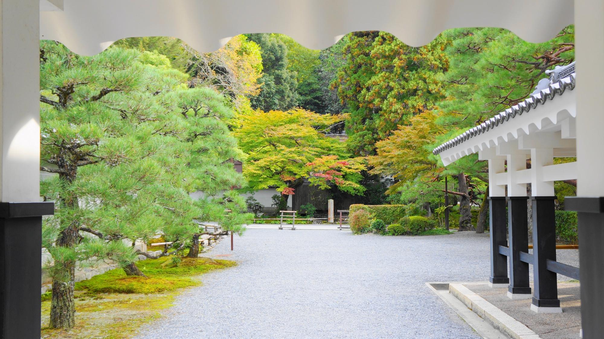 南禅寺の法堂~方丈の回廊と美しい青もみじ 2012年11月