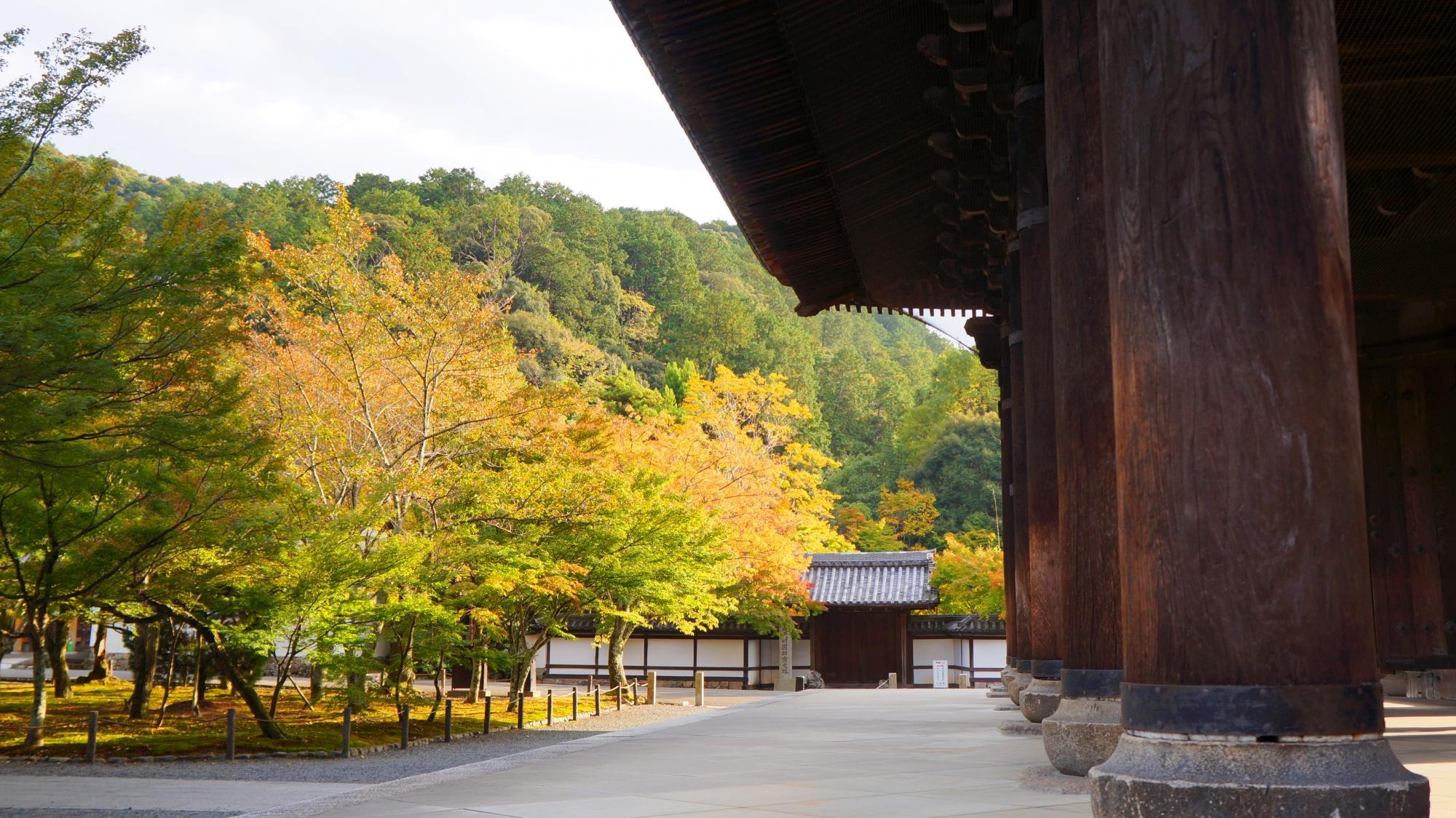 南禅寺の天授庵の美しい青もみじ