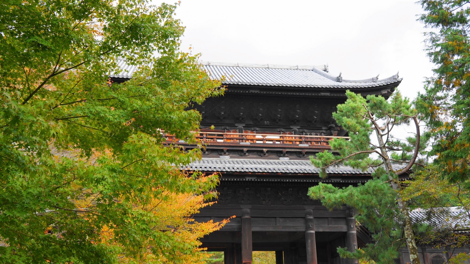 南禅寺の巨大な三門と綺麗な青もみじ
