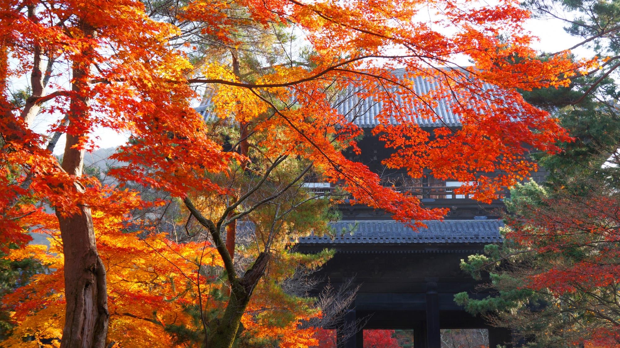 三門を秋色に染める優雅な紅葉