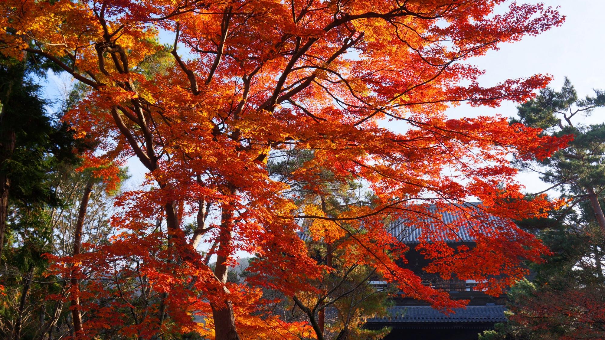 南禅寺の三門と煌く紅葉
