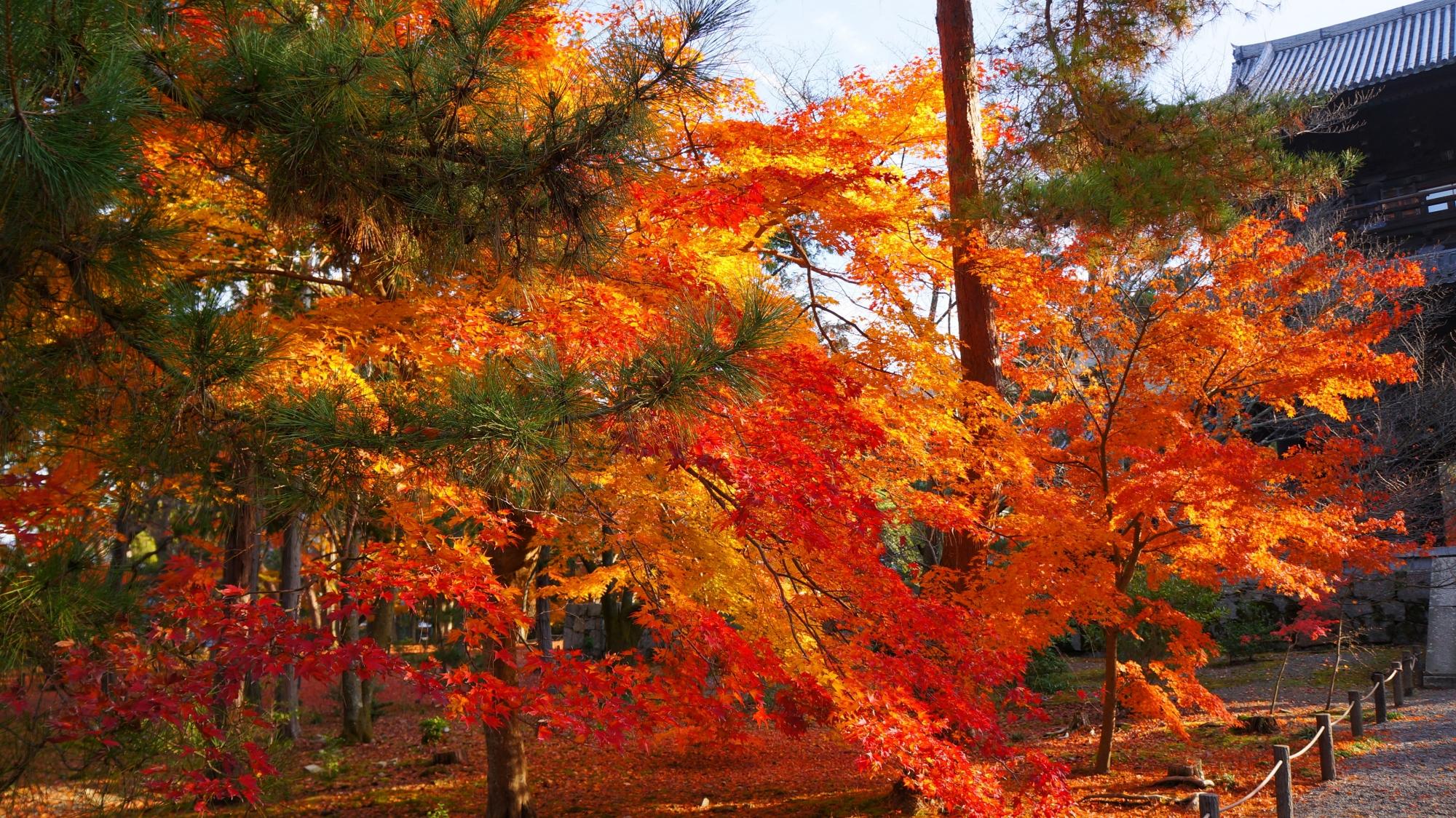 南禅寺境内を華やぐ色とりどりの紅葉