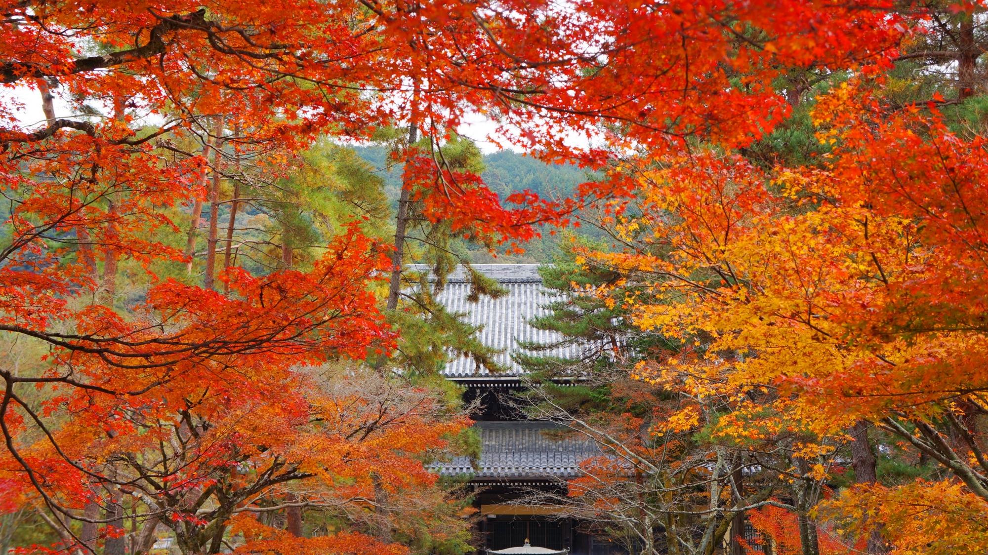 南禅寺の法堂と溢れる色とりどりの紅葉
