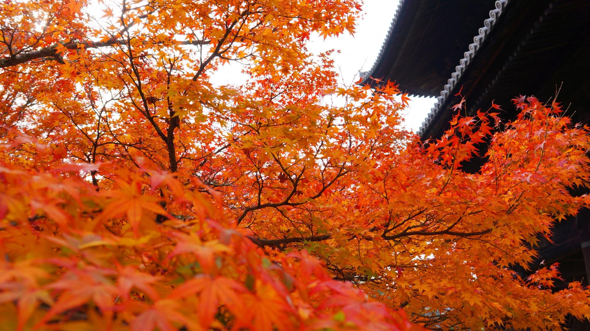 三門の下で溢れる極上の紅葉