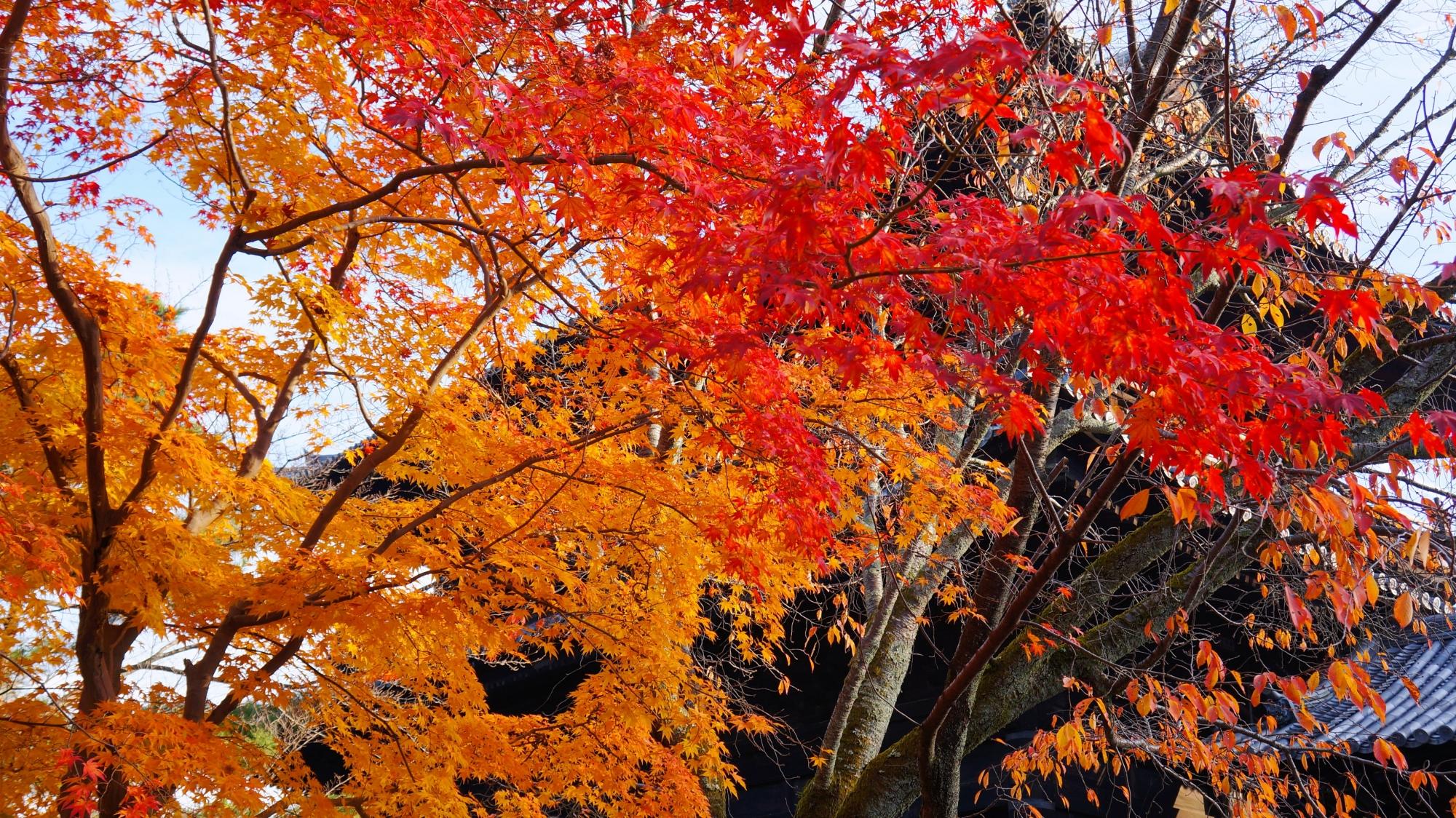 三門の下から眺めた赤やオレンジの紅葉