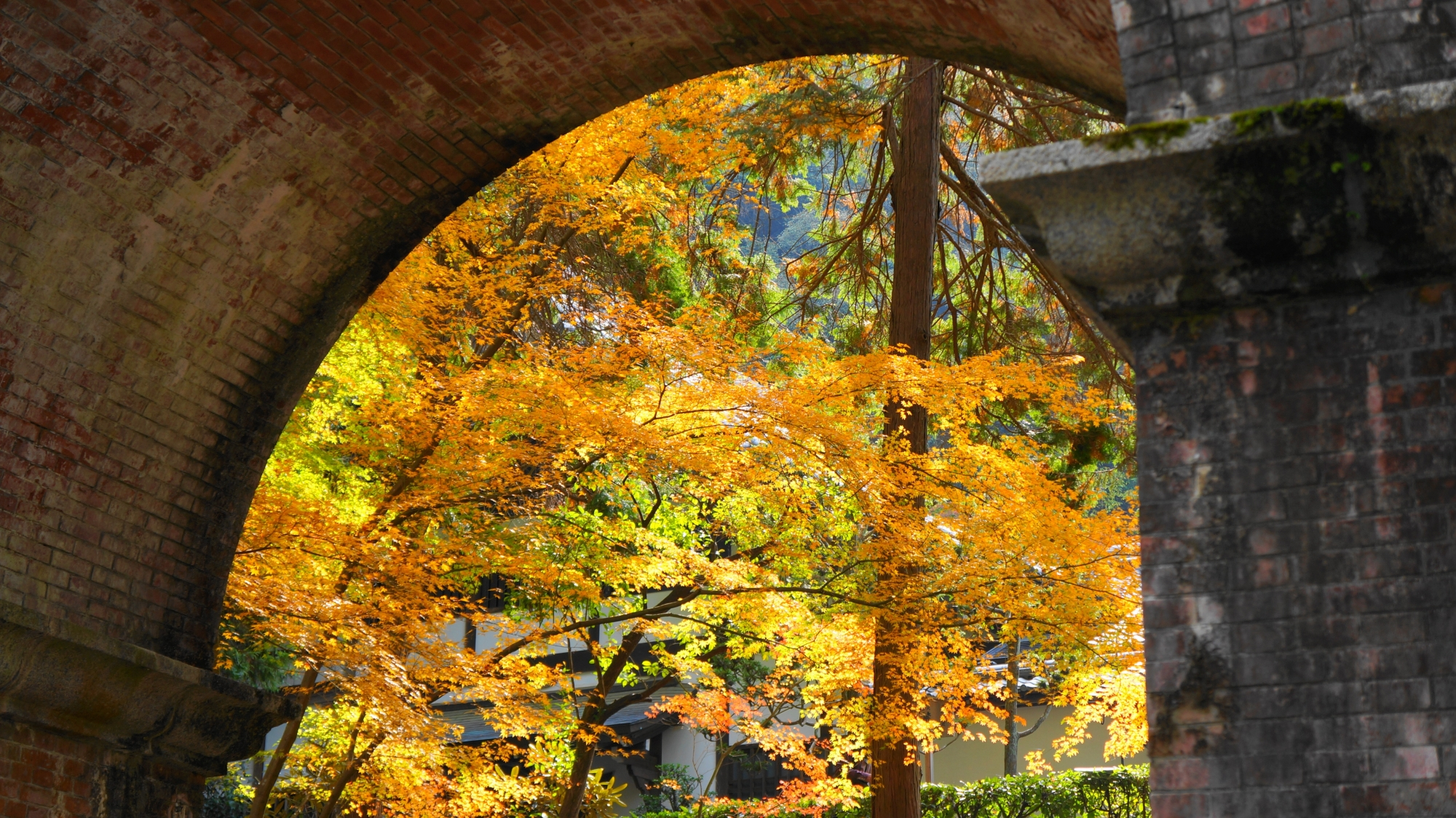 水路閣のアーチの向こうに見える柔らかな紅葉