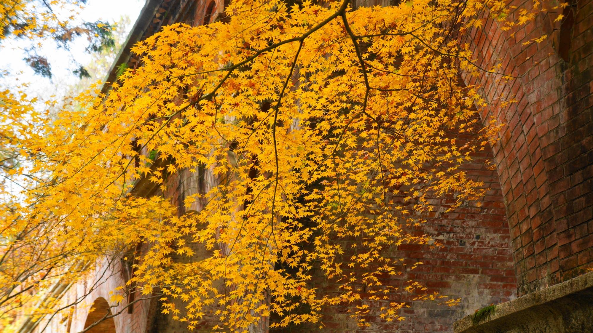 レンガ造りの水路閣を彩る繊細な紅葉