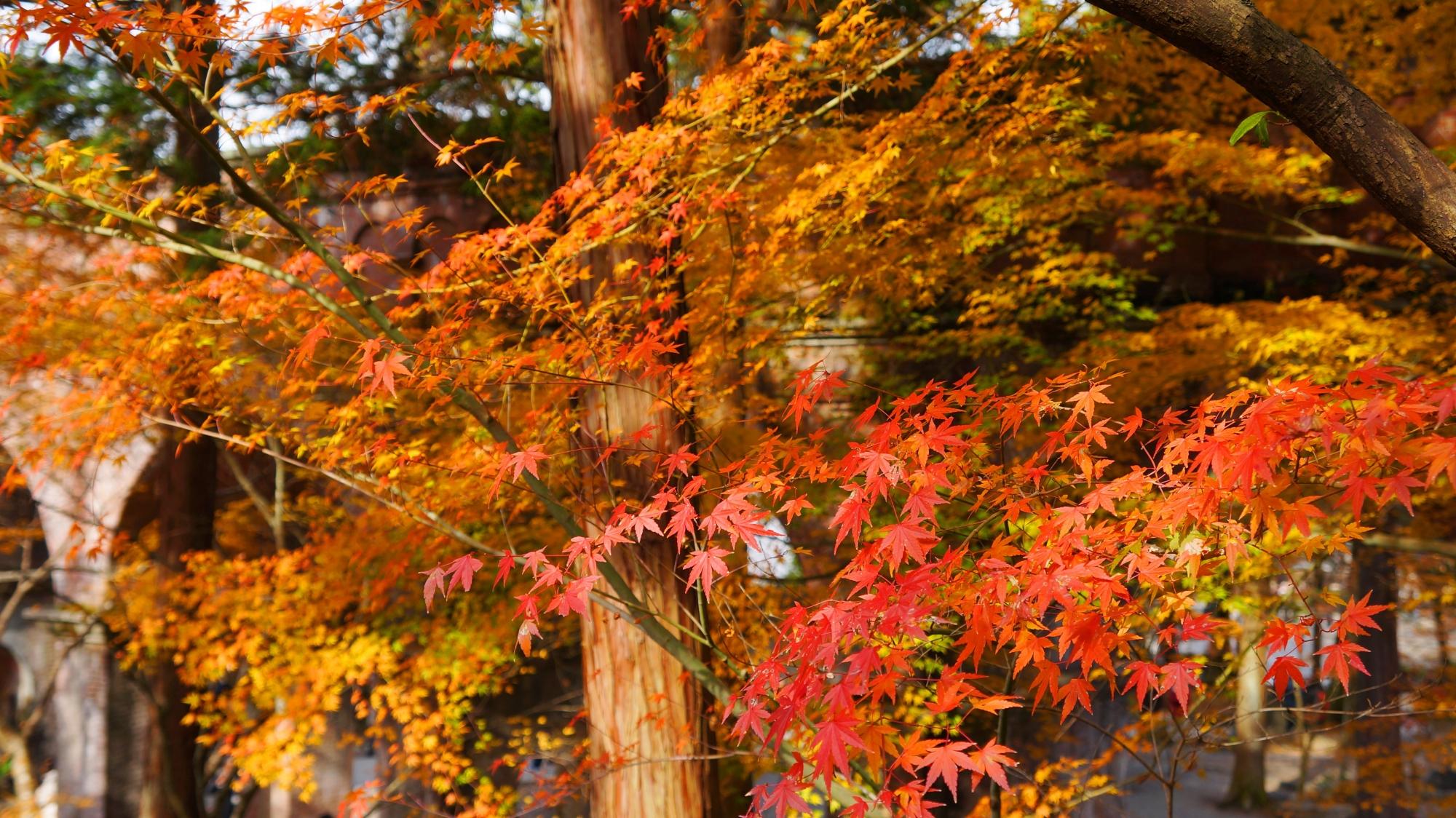 水路閣の爽やかな秋色の紅葉