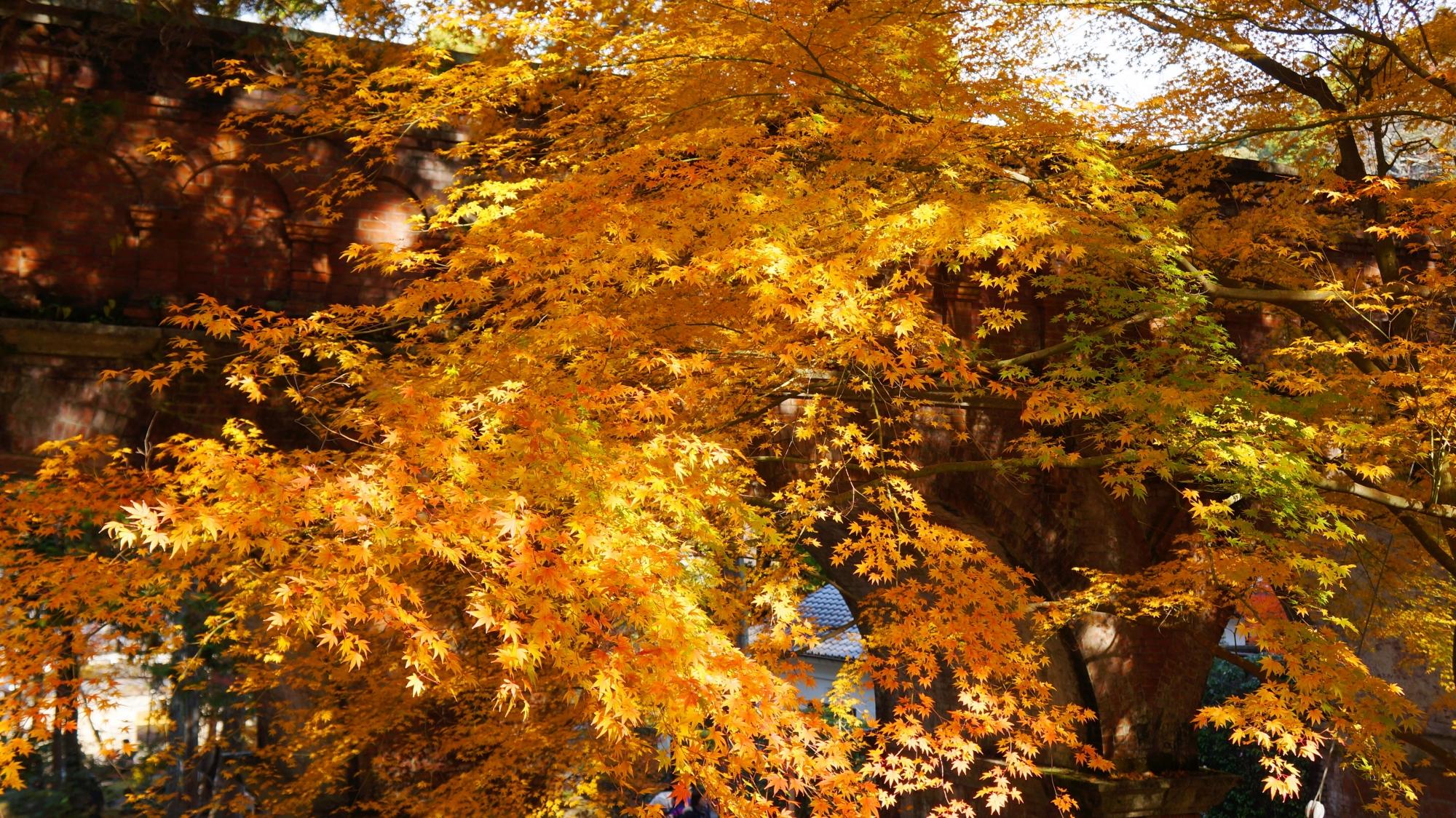 水路閣を彩る日を浴びて煌く紅葉