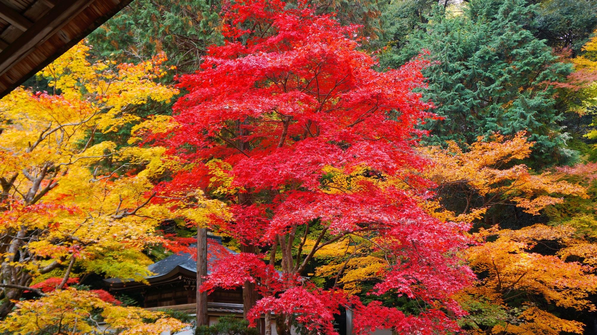南禅院庭園を彩る鮮やかな紅葉