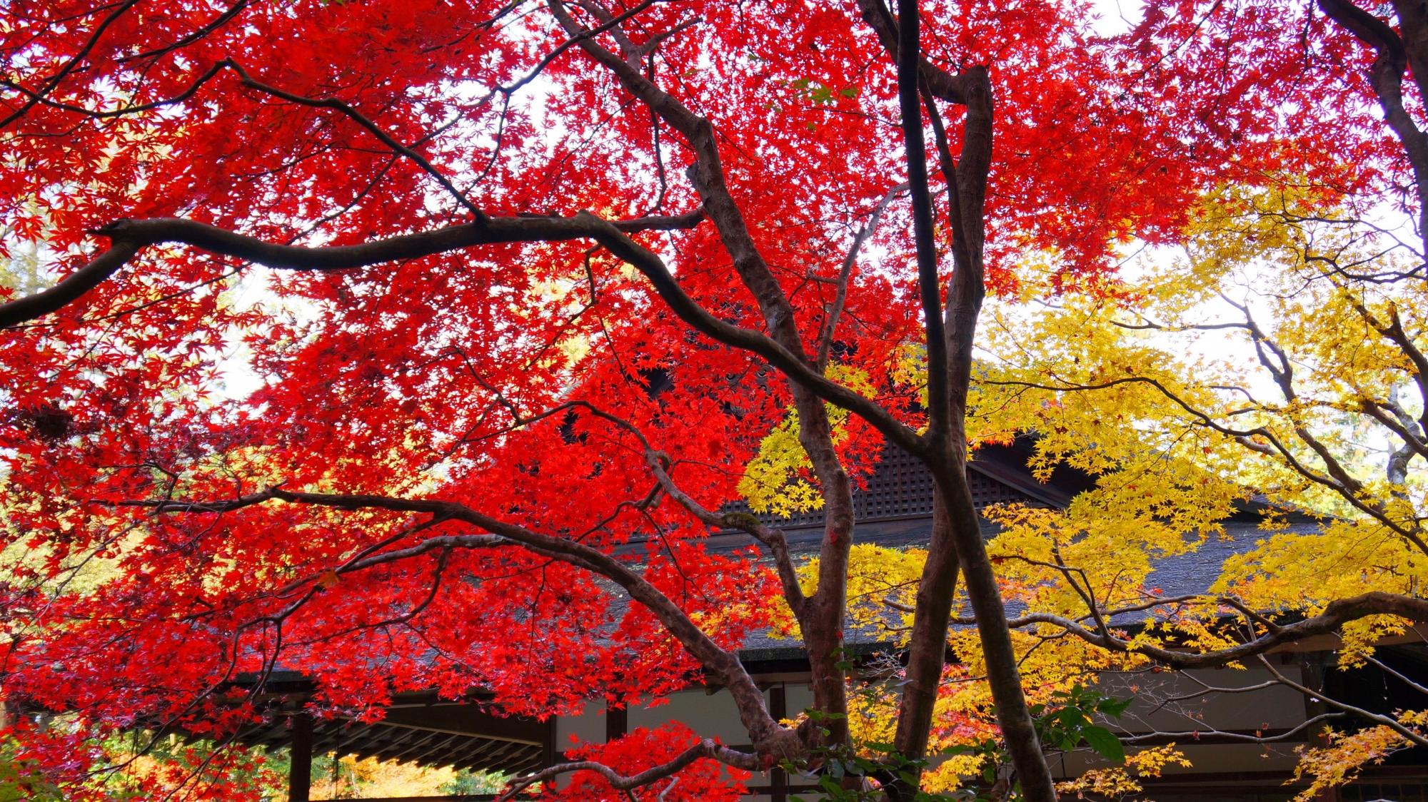 赤色と黄色の紅葉につつまれる秋の南禅院