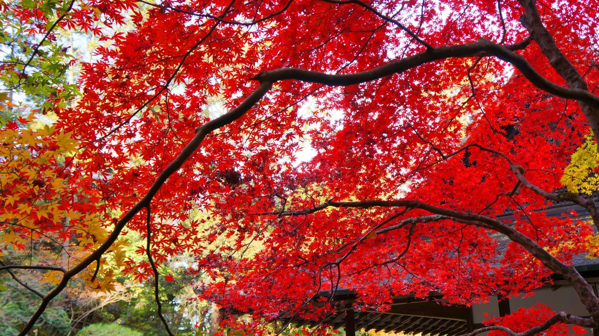 南禅院方丈を染める真っ赤な紅葉