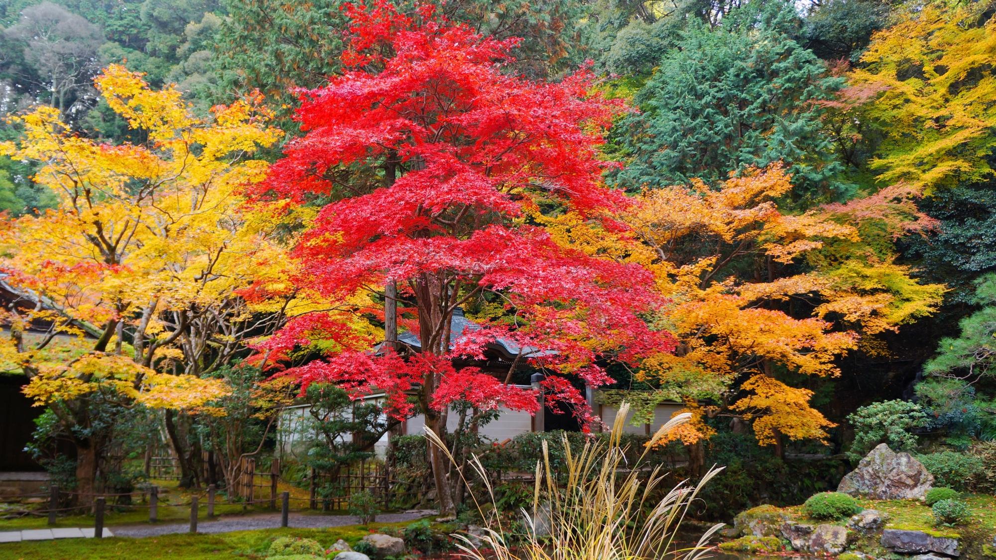 南禅寺と南禅院の素晴らしい紅葉と秋色の情景