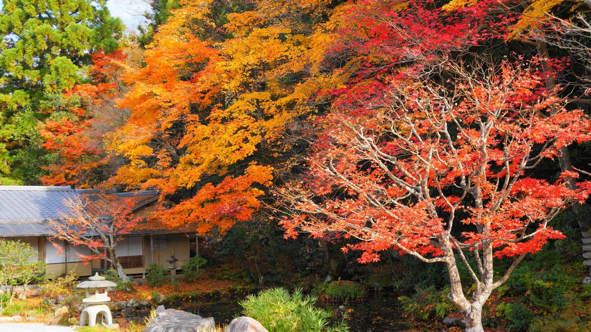 龍吟庭を染める多彩な紅葉