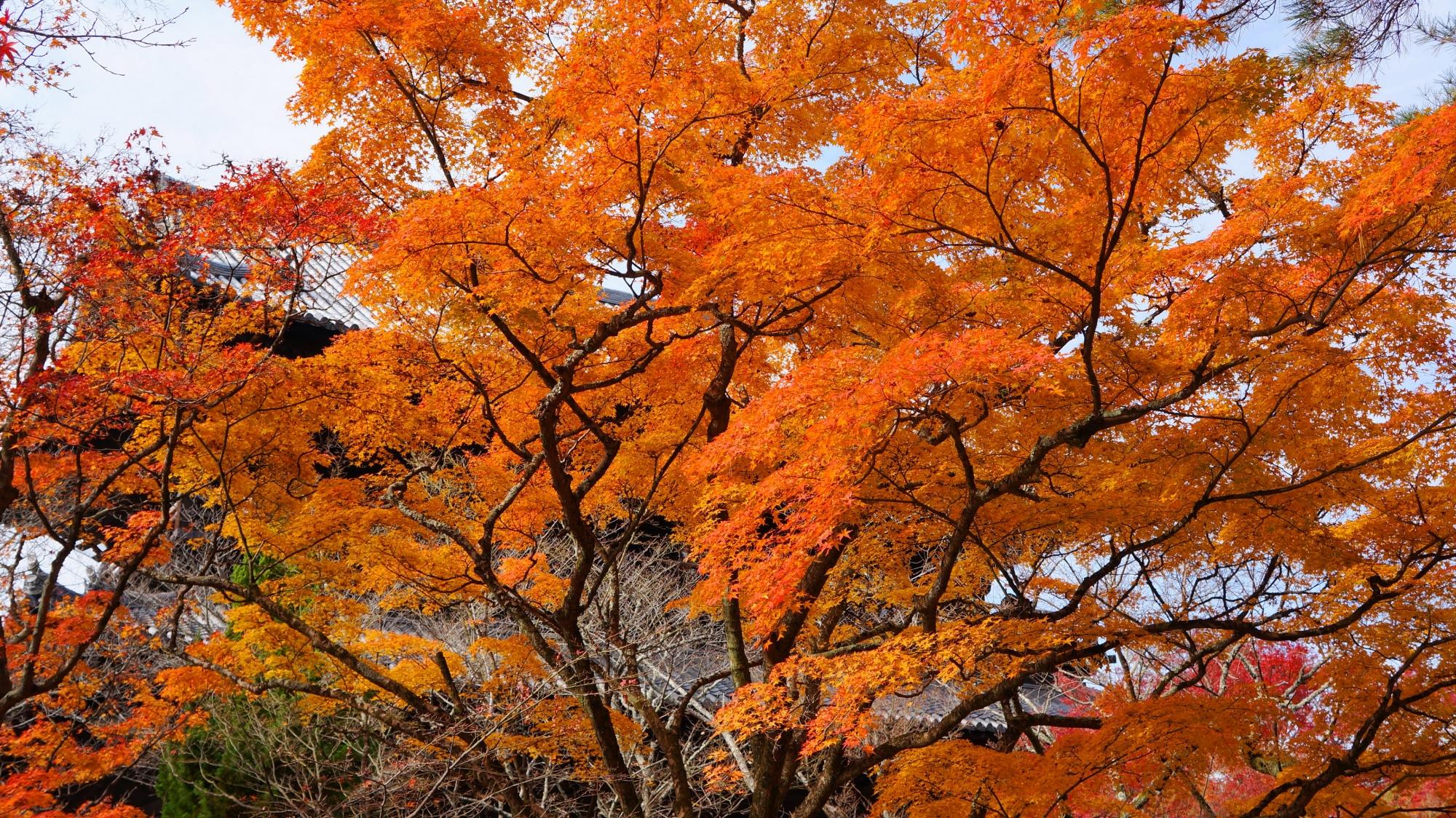 三門と空を覆う圧巻の紅葉