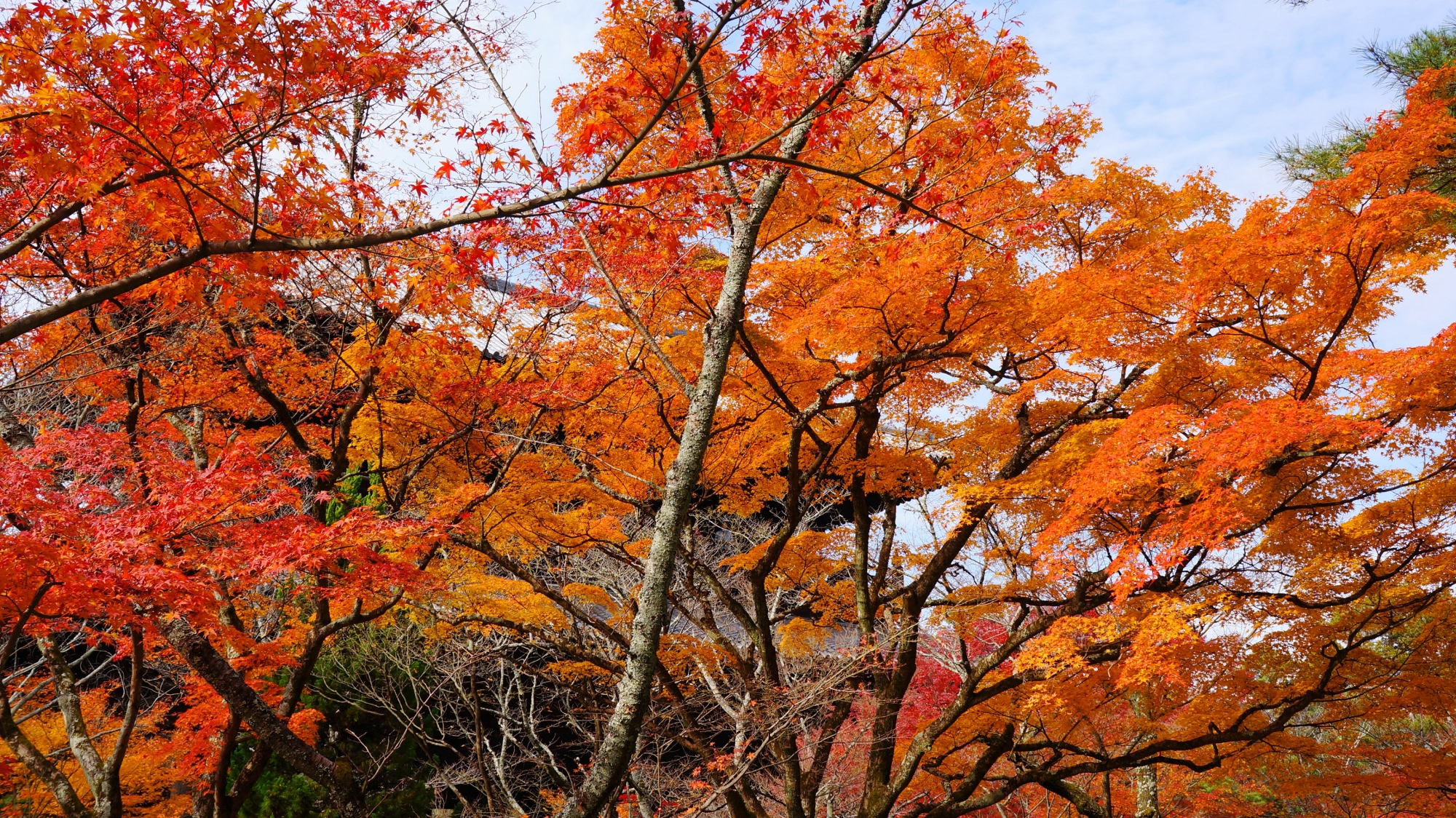 三門の前で溢れる多彩な紅葉