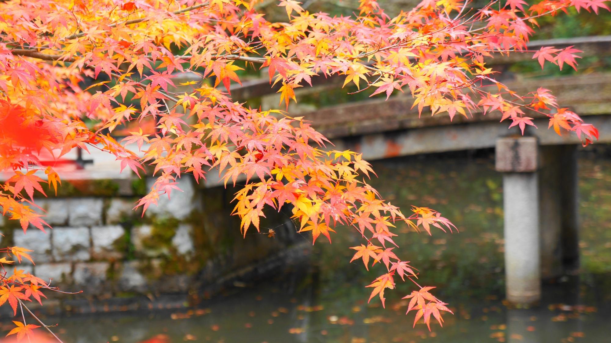 水辺を彩る晩秋の風情ある紅葉