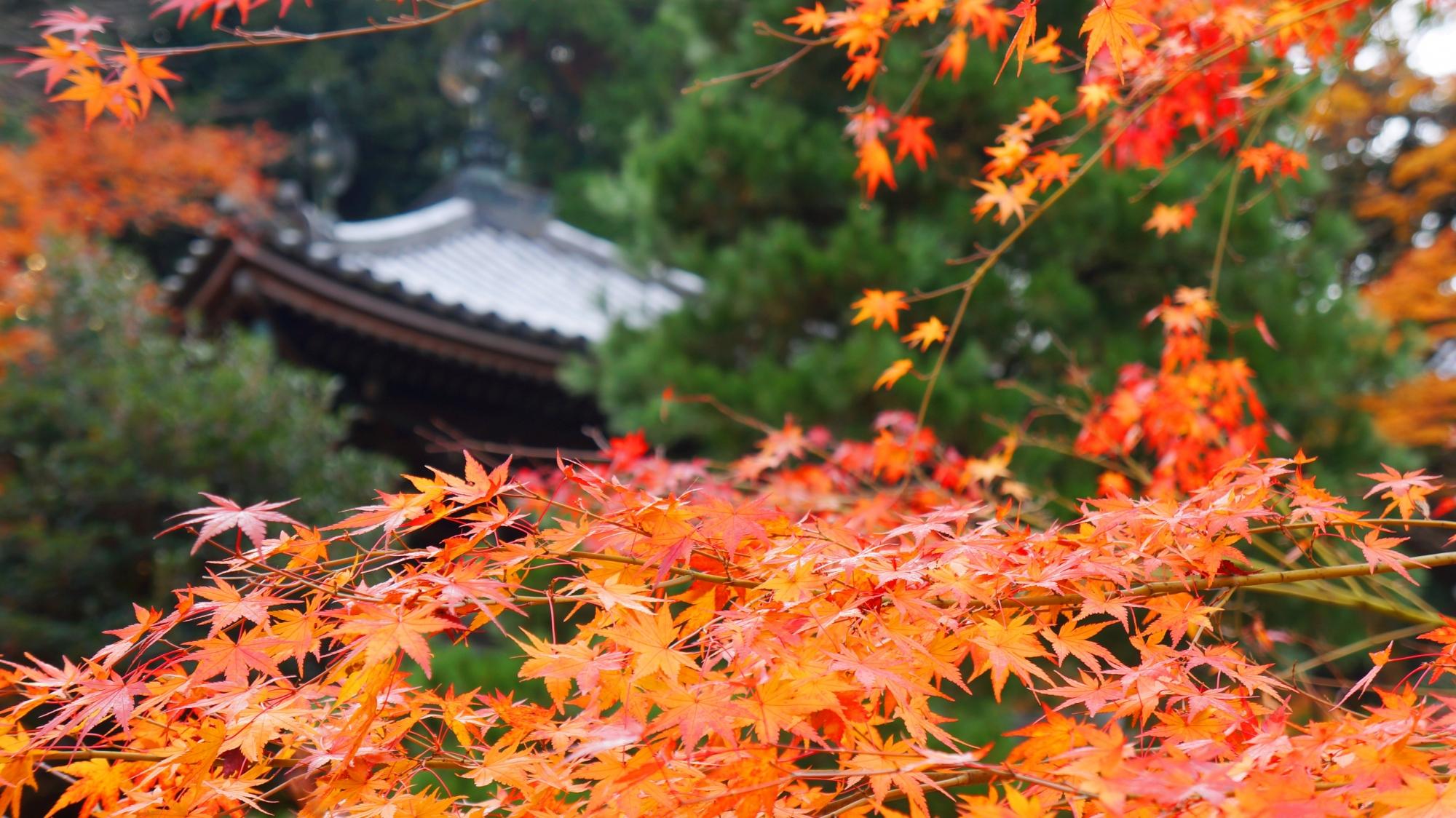 経蔵を彩る繊細で鮮やかな紅葉