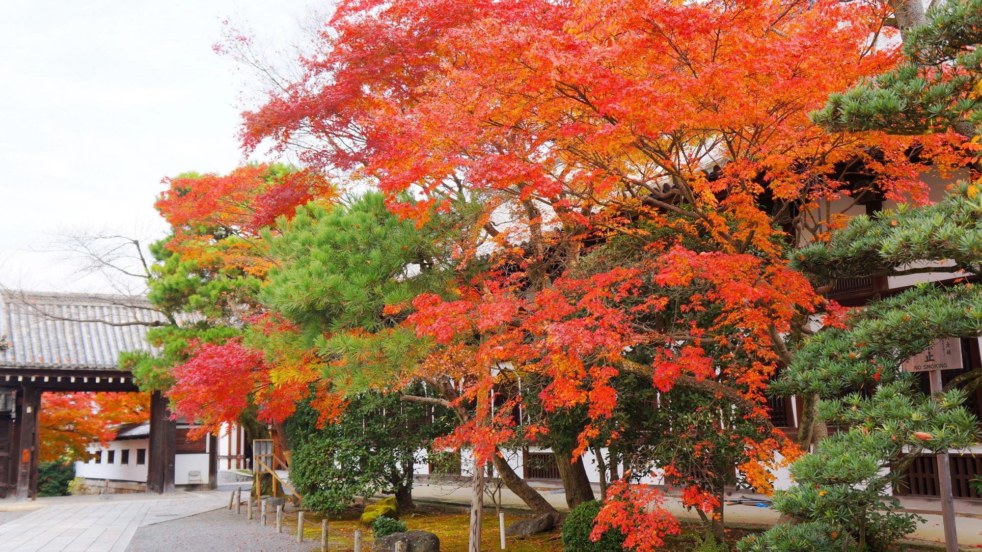 知恩院の奥に見える北門と多様な緑を彩る多彩な紅葉