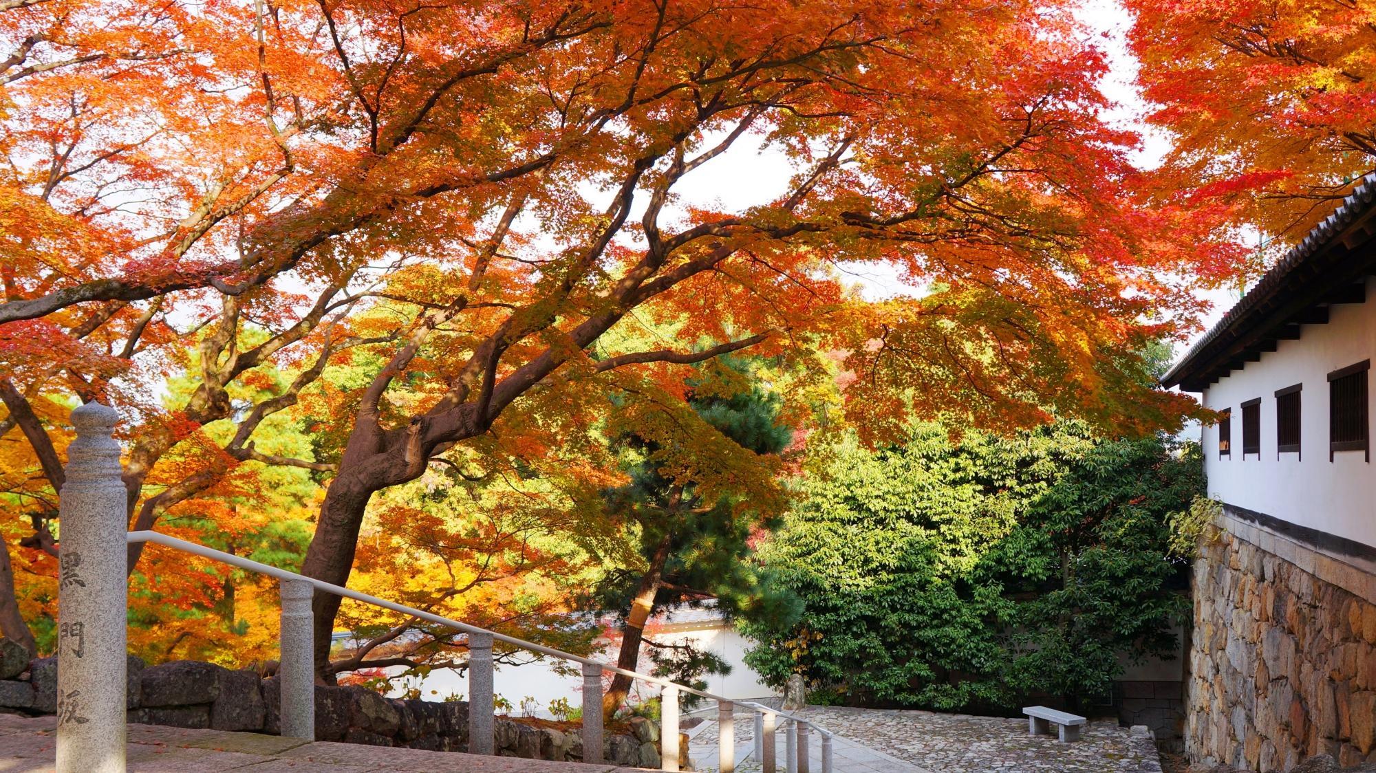 知恩院の黒門坂をつつむ優雅な淡い紅葉