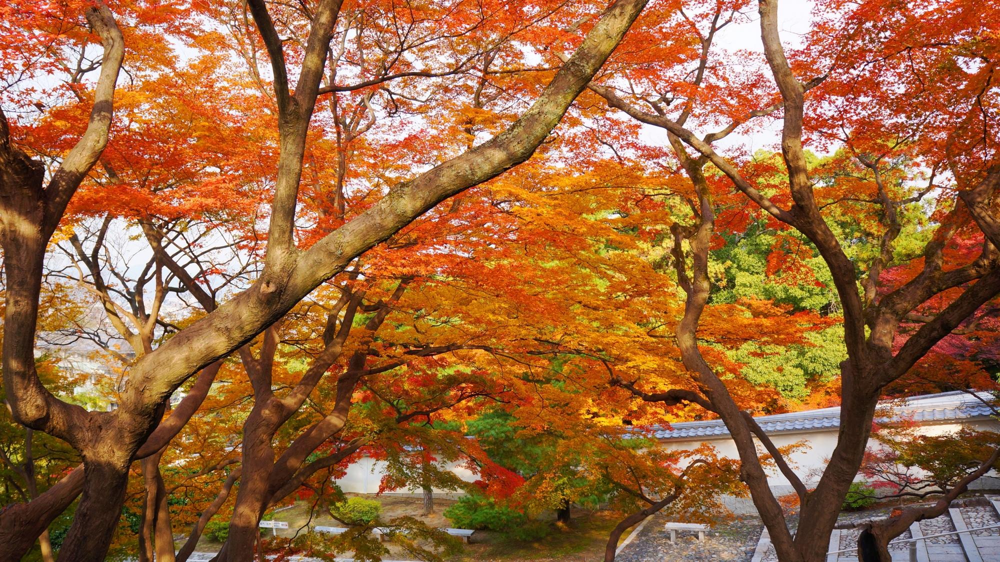 黒門坂を彩る絶品の紅葉