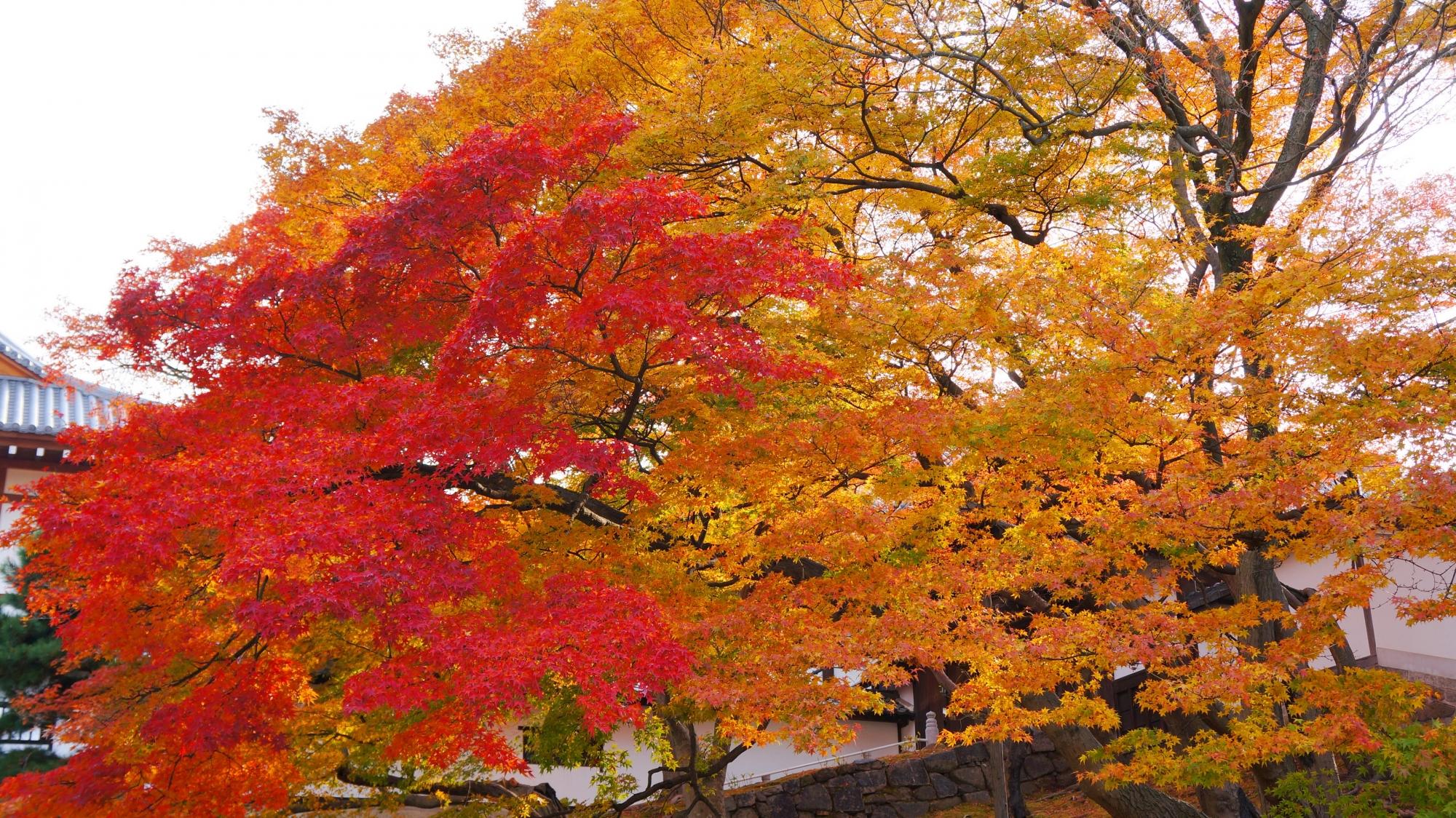 下から眺めた黒門坂の紅葉