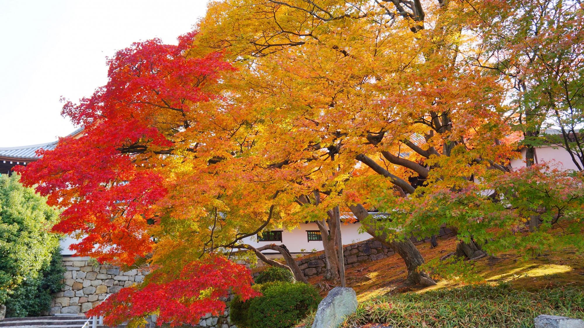 優しく癒される感じもする暖かな紅葉