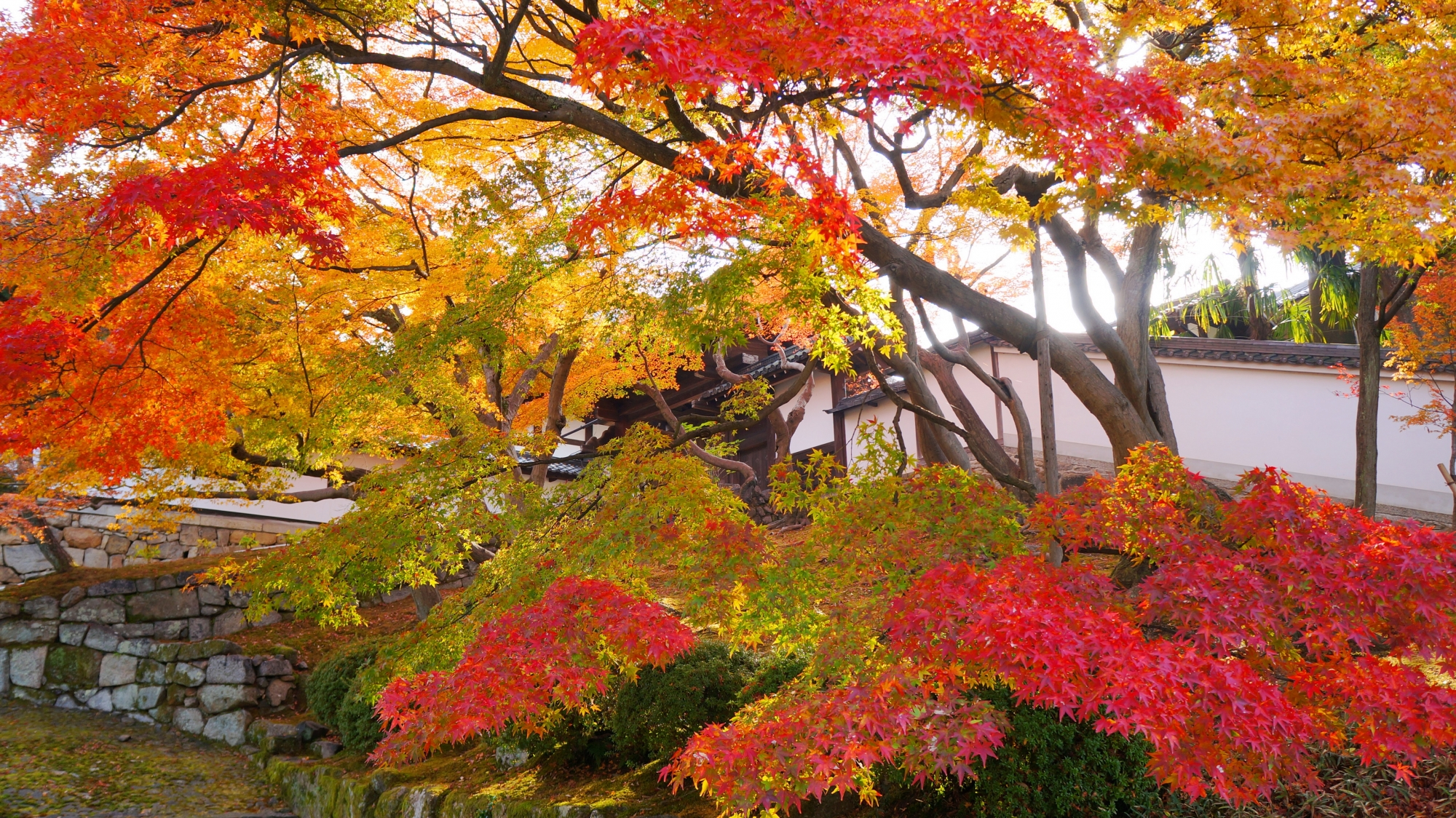 知恩院の色とりどりの鮮やかな紅葉