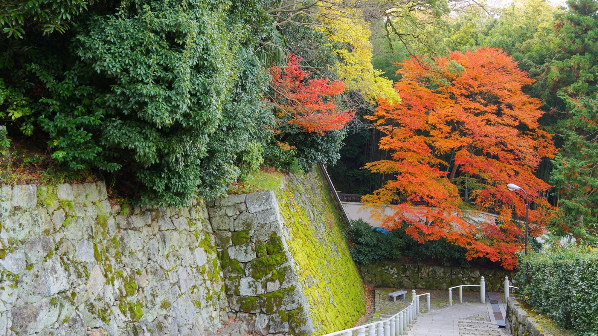 知恩院の黒門坂の下の方の紅葉と石垣の苔