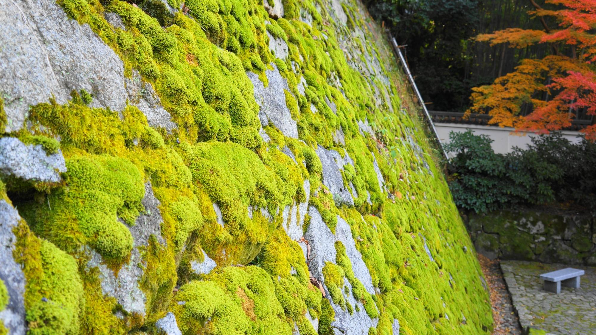 知恩院黒門坂の石垣の見事な淡い緑色の苔