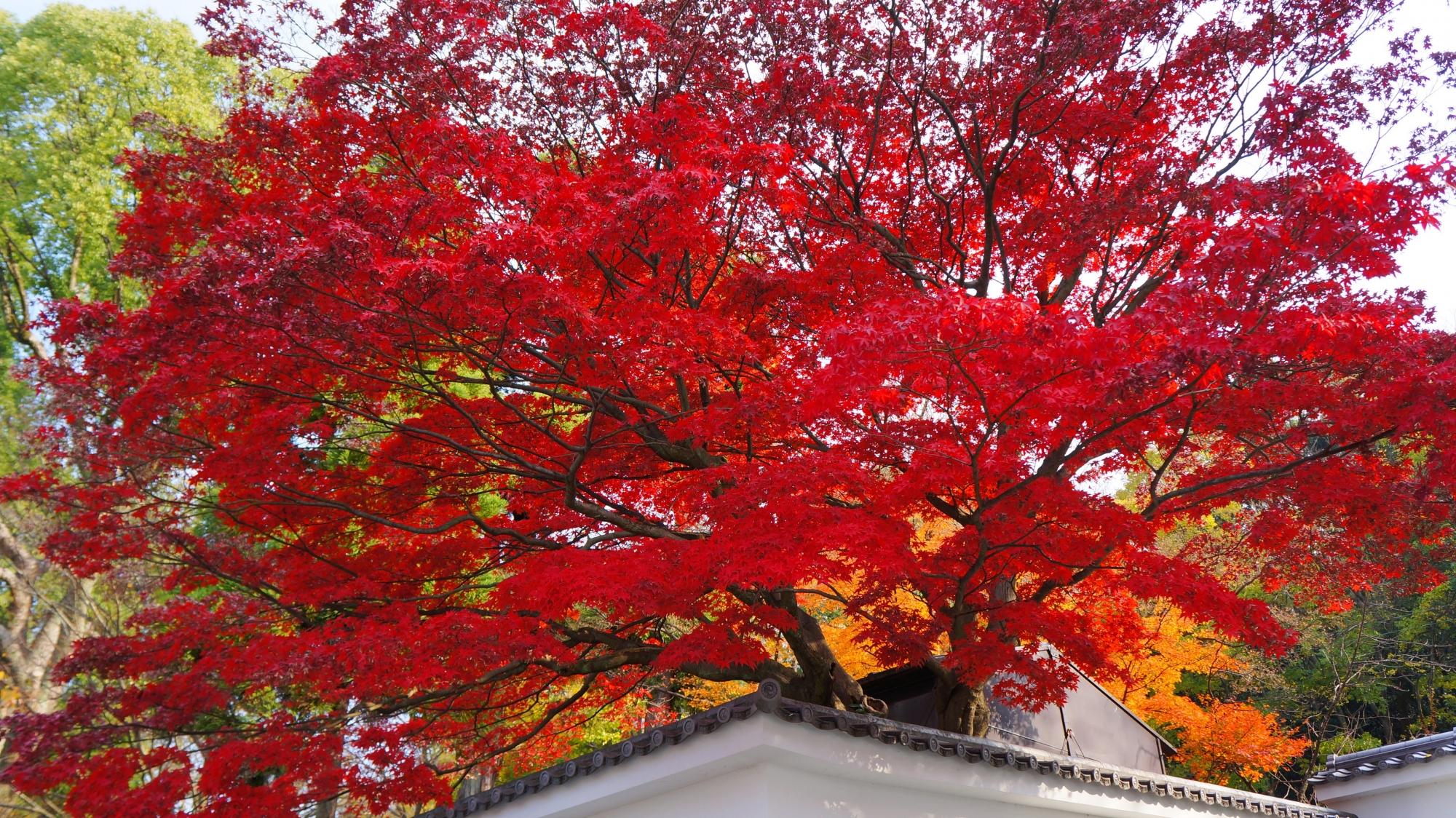 知恩院黒門坂や境内の素晴らしい紅葉や優しい秋色の情景