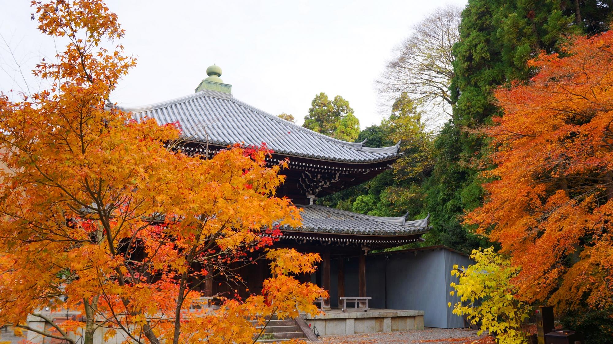 知恩院の経蔵と伽藍を染める優雅な紅葉