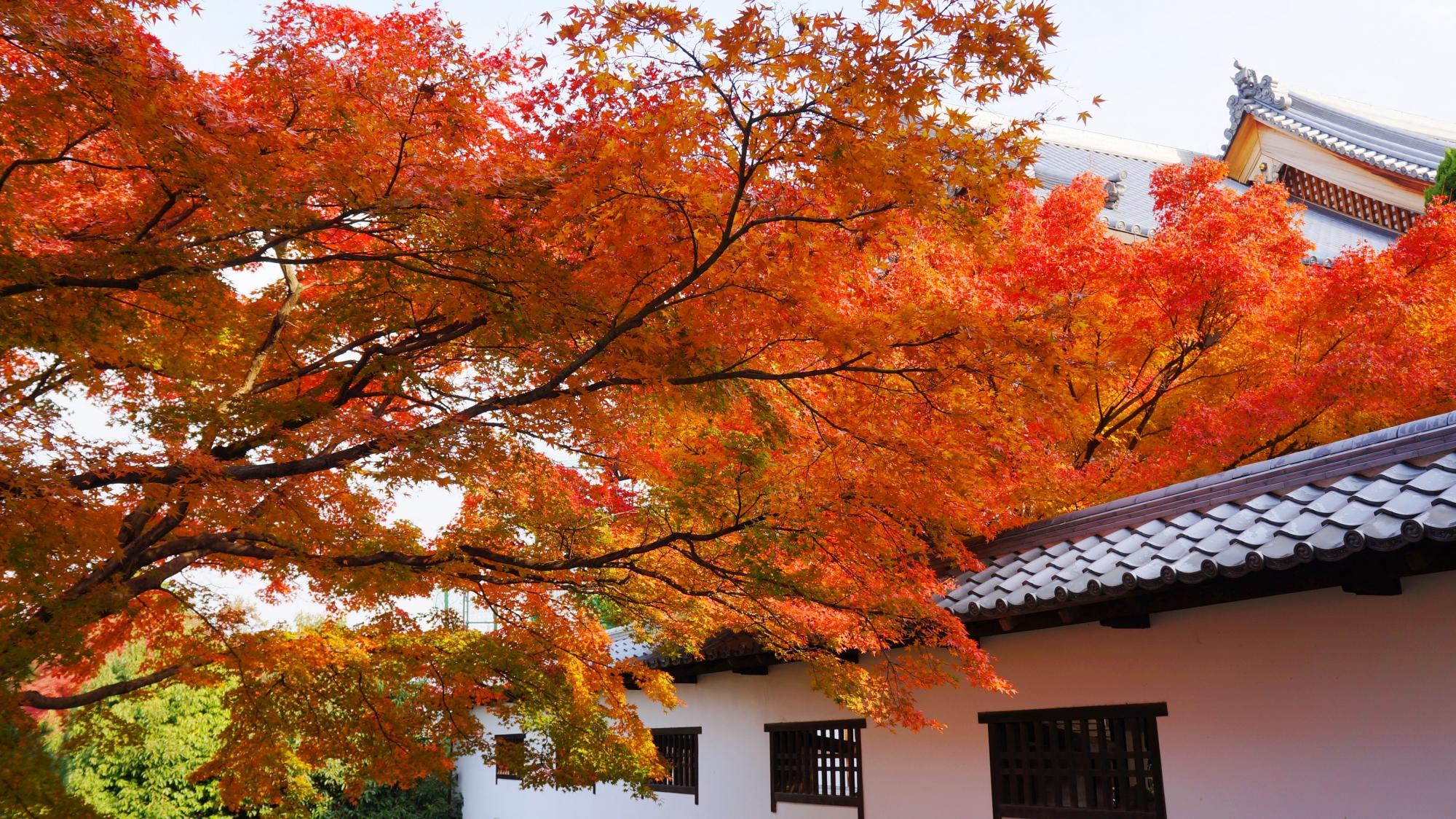 知恩院の古風で雅な雰囲気のする紅葉